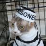 Prison Hipster