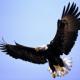 seaeagle1's avatar