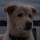 Bradydawg's avatar