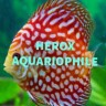 avatar for HeroxAquariophile