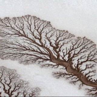 agoldengrove