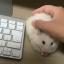 Mysza w sieci