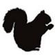 Profile photo of squrler