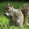 SquirrelEyes's avatar