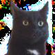 Carlos the Cat