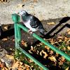 Scooter har stått ustartet utendørs i vinter - last post by Scotti-Moppi