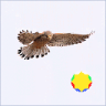 Profilbildet til Falcon