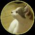 tyabuta's avatar