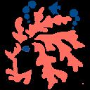 Mother of Corals