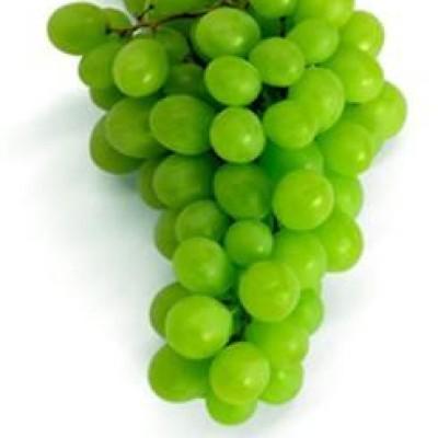 vinograd19