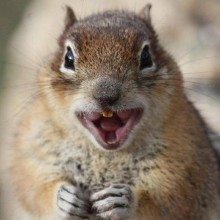 RabidSquirrel