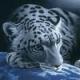 DaBooZ's avatar