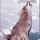 Avatar of Brian The Coyote