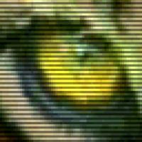 polosatus