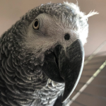 Stanley The Parrot