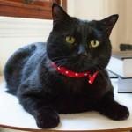 Gladstone The Cat