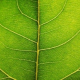 GreenthumbHydro