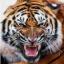 Ghost Tiger