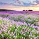 lavenderlea73
