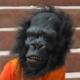 Nick Cameron's avatar