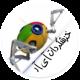mohammad ghasemy