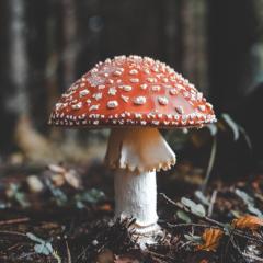 Peter McClory