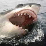 Sharkhunter21
