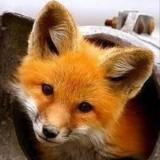 Avatar Foxy63