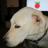 archblob's avatar