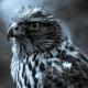 DThielke's avatar
