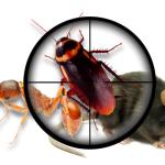 Pest Control Bell Park