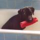 Hund's avatar