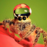 aka_arachnida