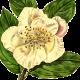 lilliline
