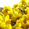 FlowersRlit
