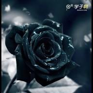 BLACKROSE007