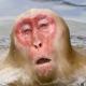 dogcat2's avatar