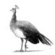 Profile picture of Drella