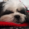 pookel's avatar