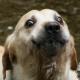 Hotarous's avatar