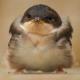 fengchiu1997's avatar