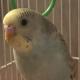View MalusLupo's Profile