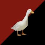 duckasaurusss