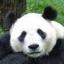 PandaBoy1989