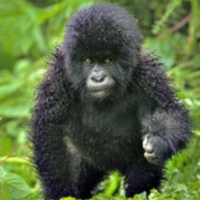 gravatar for Rainy Gorilla