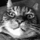 J92R's avatar