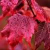 Autumnify