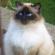 catsaremeowing's avatar