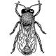 Piers Harding's avatar