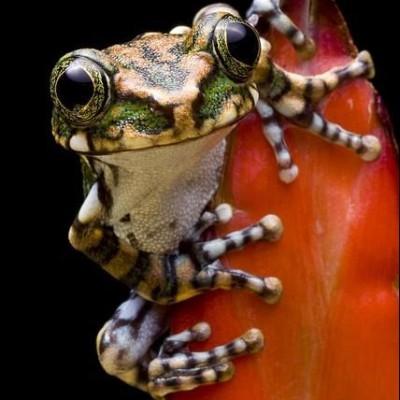 angrygreenfrogs